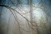 Walnut Tree Photograph Posters - Misty Morning Poster by Aaron Codling