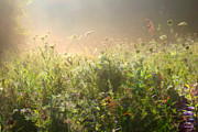 Meadow Flowers Originals - Misty Morning by John Robichaud