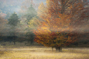 West Virginia Landscape Posters - Misty Morning Maple Poster by Joseph Rossbach