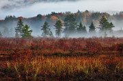 Fall Colors Autumn Colors Posters - Misty Morning Meadow I - Cranberry Wilderness Poster by Dan Carmichael