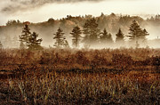 Abstract Blueberries Framed Prints - Misty Morning Meadow II - Cranberry Wilderness Framed Print by Dan Carmichael