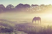 Jenny Rainbow - Misty Morning on the Dutch Field