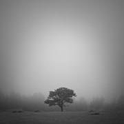 Misty Morning Print by Patrick Downey