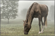 Rocky Mountain Horse Prints - Misty Morning Print by Peter Lindsay