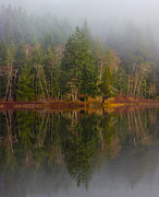 Birch Lake Prints - Misty Print by Randy Hall