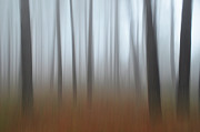 Trees Abstract Tree Lines Forest Wood Prints - Misty thoughts Print by Simona Ghidini