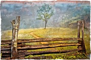 Fences Prints - Misty Tree Print by Debra and Dave Vanderlaan