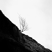 Black And White. Mono. Monochromatic Posters - Misty Tree Glen Etive Poster by John Farnan