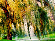 Willow Lake Digital Art Posters - Misty Weeping Willow Tree Dreams Poster by Carol F Austin