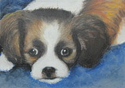 Dog Portraits Pastels Framed Prints - Mitzy Framed Print by Jeanne Fischer