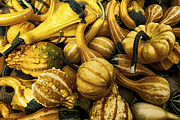 Mark Miller - Mixed Gourds