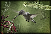 Cris Hayes - Mixed Media Hummingbird...