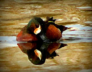 Ducks Pastels - Mixed Reflections by Marcus Moller