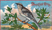 Mocking Metal Prints - Mocking Bird Metal Print by Studio Artist