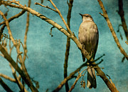 Mocking Digital Art Framed Prints - Mocking Bird Framed Print by Zsuzsanna Szugyi
