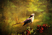 Mocking Digital Art Framed Prints - MOCKINGBIRD Have You Heard... Framed Print by Lianne Schneider