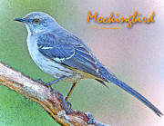 Mockingbird Digital Art Posters - Mockingbird Poster Image Poster by A Gurmankin