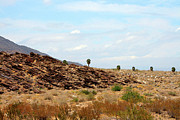 Grass - Mojave Deset Landscape by Ben and Raisa Gertsberg