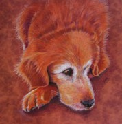 Pencil Artwork Drawings Prints - Mollie Print by Marilyn Smith