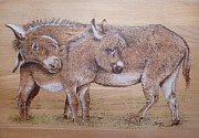 Donkey Pyrography Prints - Molly and Tubs Print by Manon  Massari