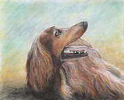 Hound Pastels Framed Prints - Molly Framed Print by Arthur Fix