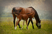 Grazing Horse Posters - Mom and Baby Poster by Deborah Benoit