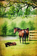 Young Horses Prints - Mom and Foal Print by Darren Fisher