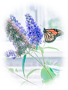 Exquisite And Beautiful Digital Art Prints - Monarch Beauty Print by Renee Barnes