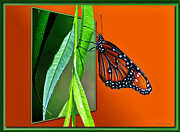 Monarch Butterfly 01 Print by Thomas Woolworth