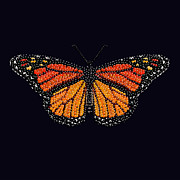 R  Allen Swezey - Monarch Butterfly...