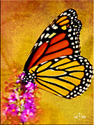 Carol F Austin - Monarch Butterfly Color...