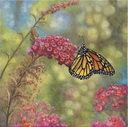 Zaccheo Metal Prints - Monarch Butterfly Metal Print by John Zaccheo