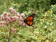 Adirondacks Region - Monarch of the North by Joshua House