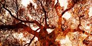 Juan Jose Espinoza - Monarch Red Tree