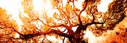 Juan Jose Espinoza - Monarch Tree