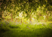 Resting Photos - Monets Garden by Amy Weiss