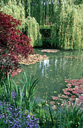 Garden Framed Prints Posters - Monets Lily Pond 2 Poster by Kathy Yates