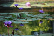 Lilly Pond Photos - Monets Waterlily Pond Number One by Heather Kirk