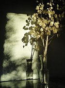 Guy Ricketts Photography Prints - Money Plants Really Do Cast Shadows Print by Guy Ricketts