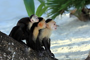 Faced Framed Prints - Monkey Family Framed Print by Sophie Vigneault