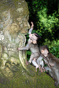 Dray Van Beeck - Monkeys at a statue in...