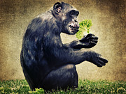 Chimpanzee Prints - Monkeys life Print by Angela Doelling AD DESIGN Photo and PhotoArt