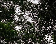 Allen Sheffield - Monkeys Overhead