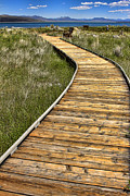 Jason Abando - Mono Lake Boardwalk 2