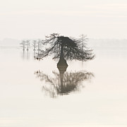 Fog Art - Monochromatic Morning on Lake Mattamuskeet  by Bill Swindaman