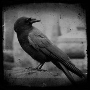 Gothicolors Donna Snyder - Monochrome Crow