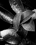 Tatiana Parmeeva - Monochrome leaves