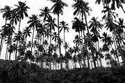 April Reppucci - Monochrome Palms