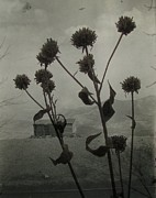 Plants Wildflowers Prints - Monochrome Wildflowers Print by Gothicolors And Crows