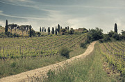 Vineyards Photos - Montalcino - Tuscany by Joana Kruse